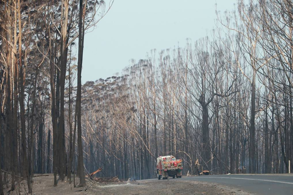 Fire and backburning operations from New Year's Eve leaves a bleak sight on the Princes Highway near Wandandian. Picture: Sylvia Liber