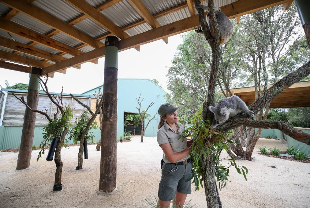 Saving a native Aussie icon: Liz Florance with Imogen in the new expanded koala enclosure at Symbio Wildlife Park. Picture: Adam McLean.
