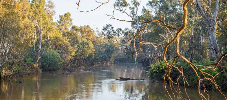 'Top-down approach won't work' in Murray-Darling Basin decisions
